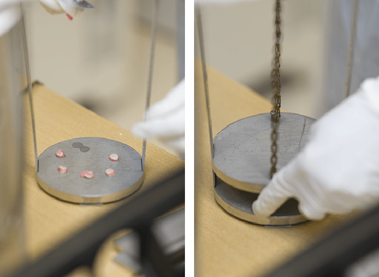 Researcher pressing human brain tissue samples before freezing