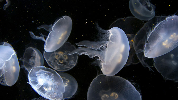 glowing group of jellyfish