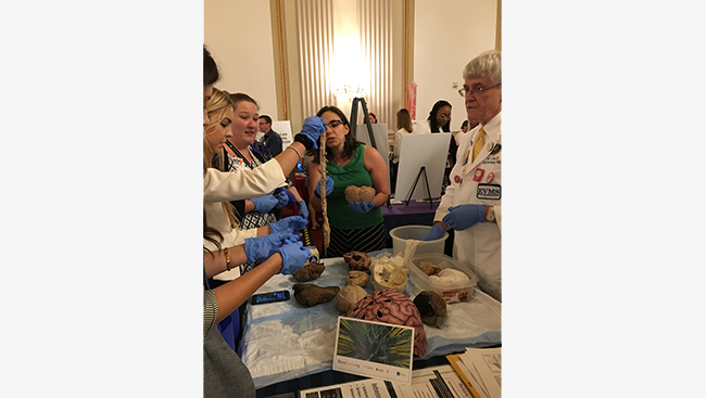 Participants hold a spinal cord as Neuroscientist Hilary Gerstein describes its role in the nervous system.