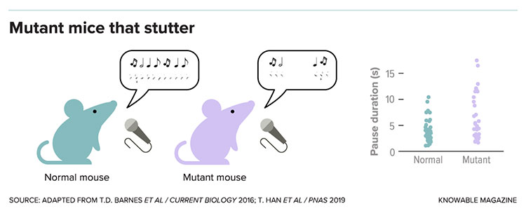 Mutant mice that stutter