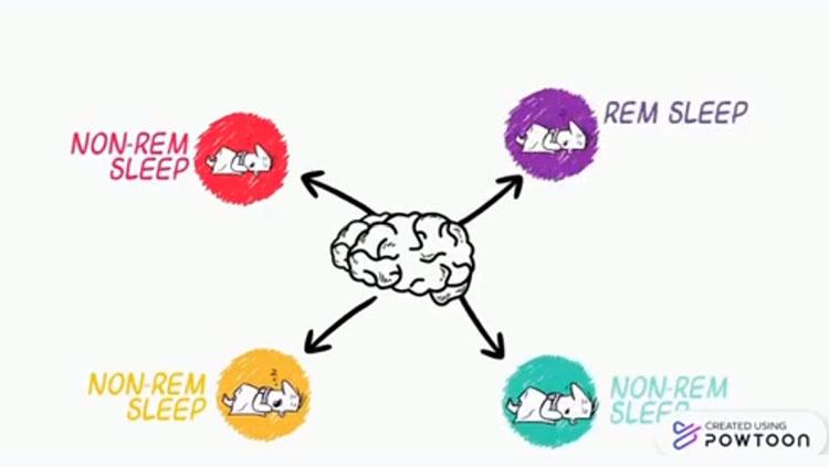Chart of REM Sleep