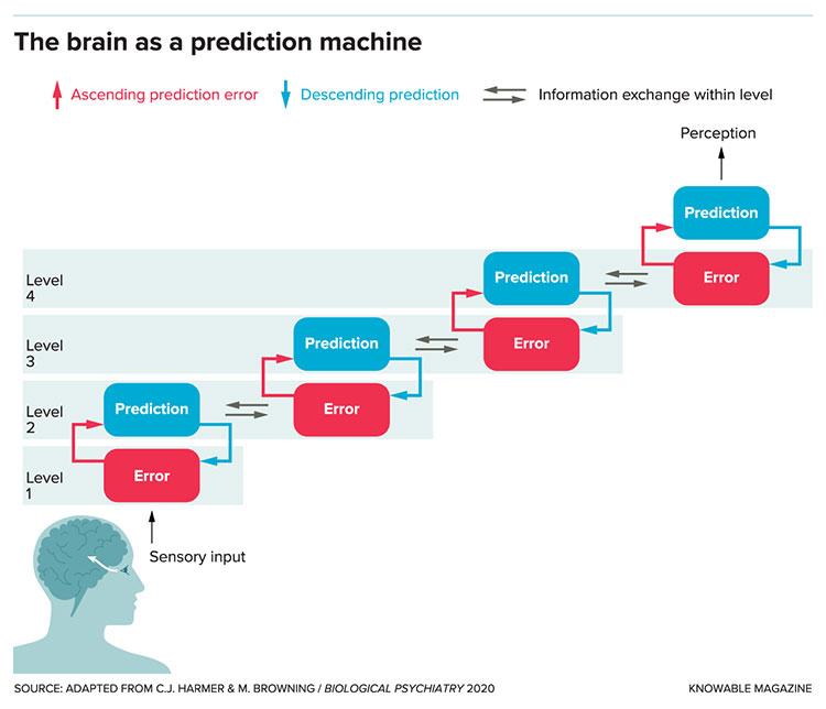 Brain prediction graphic