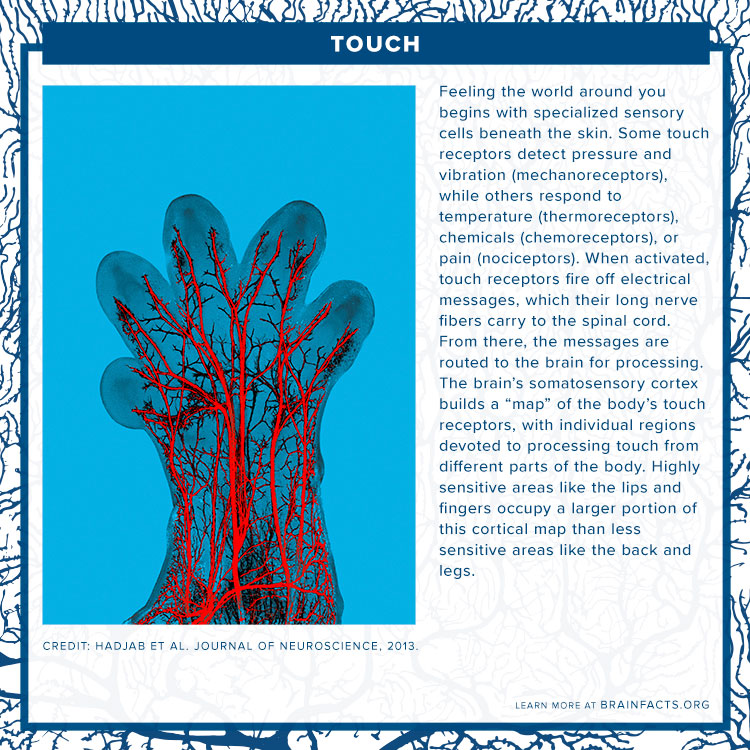 Touch Brain Byte