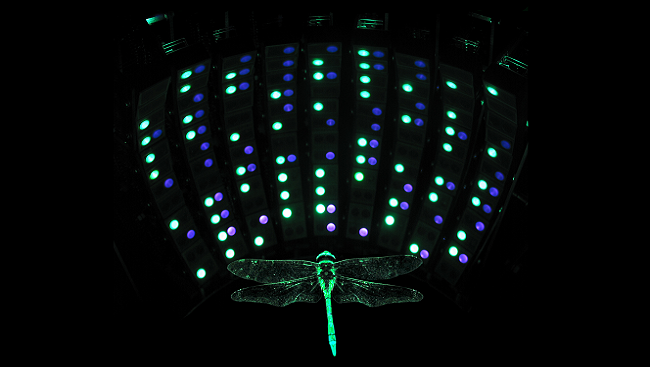 The image shows a dragonfly surrounded by a panoramic ultraviolet and green light display designed to stimulate the large neurons in the retina of the insect's middle eye.