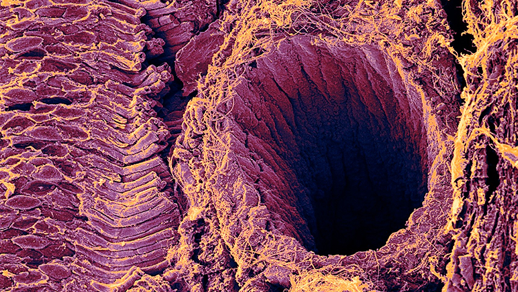 Image of a guinea pig's eye