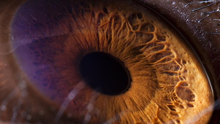 Close-up image of a chimpanzee eye