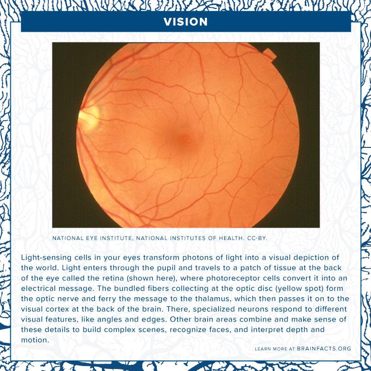 Vision Brain Byte