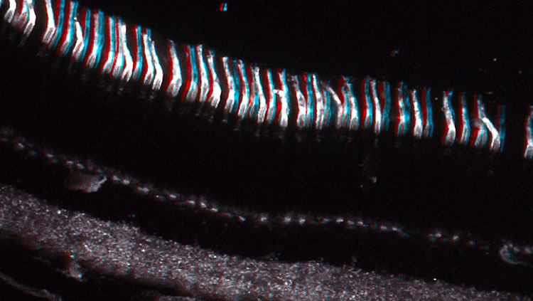 3D image of cones in the retina