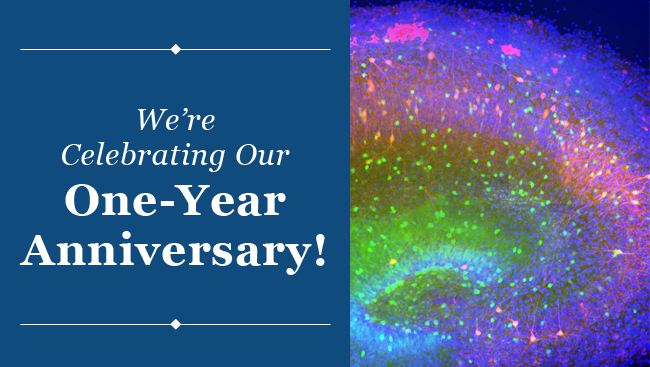 BrainFacts.org - One Year Anniversary