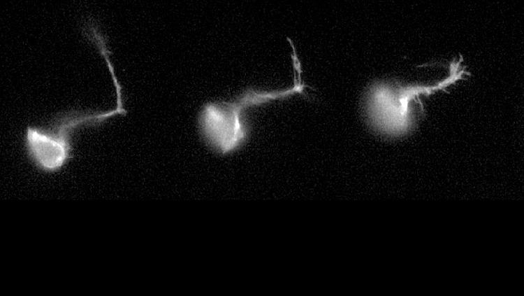 white neurons horizontal