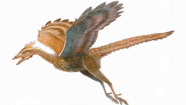 Illustration of a prehistoric dinosaur, Archaeopteryx.